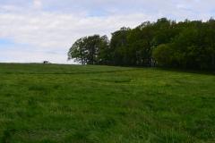 Wiesenlandschaft mit Waldstück